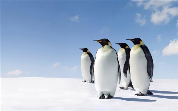 Thuật toán Penguin là gì?